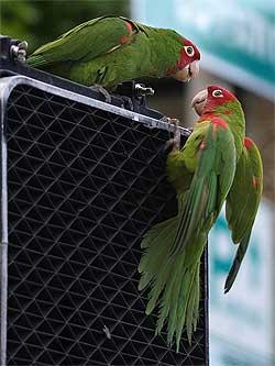 parrot discussion